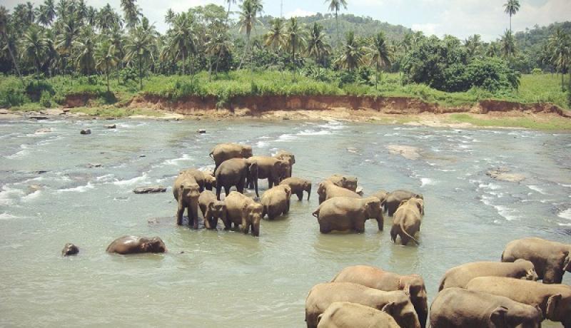 Враження нашого менеджера від Шрі Ланки фото 4